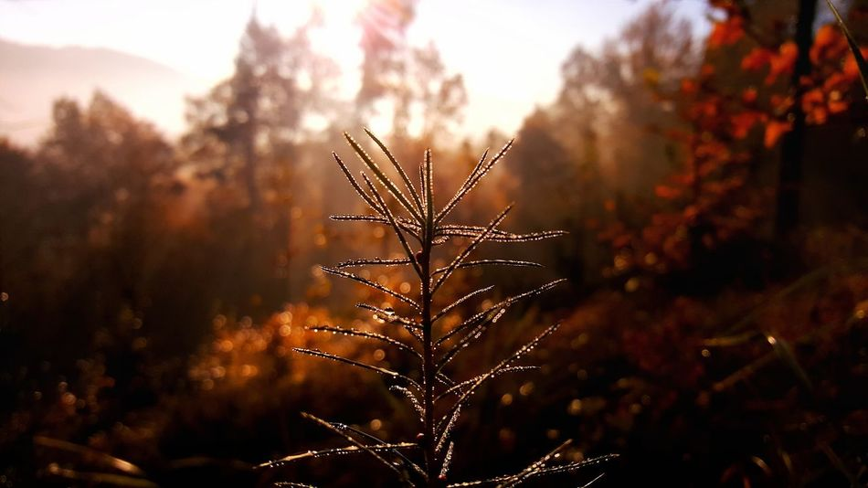 Beauty In Nature Close-up Day Growth Nature No People Outdoors Plant Poland Sunrise Tree