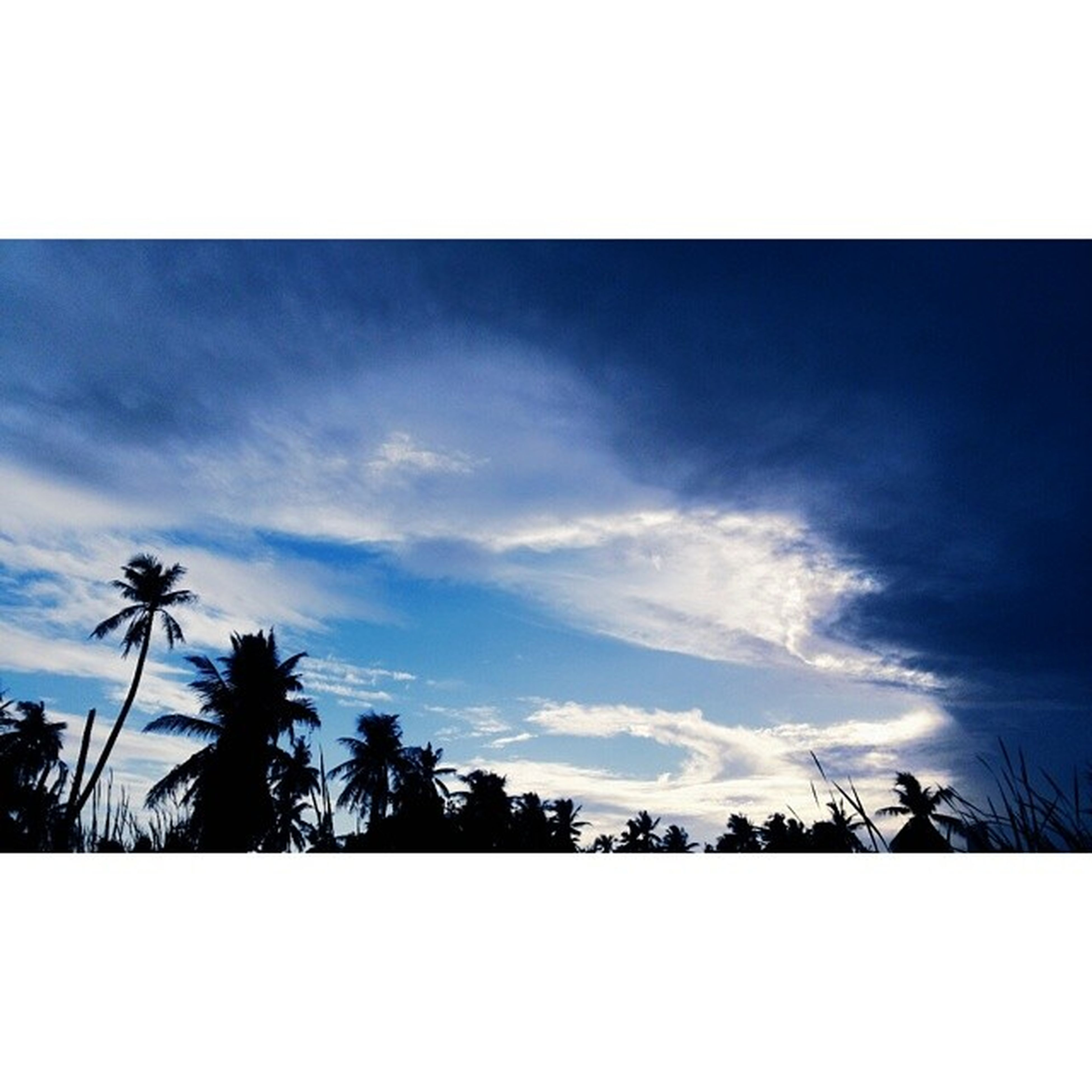palm tree, transfer print, sky, silhouette, tree, low angle view, auto post production filter, cloud - sky, cloud, tranquility, nature, beauty in nature, growth, tranquil scene, scenics, blue, outdoors, cloudy, no people, sunset