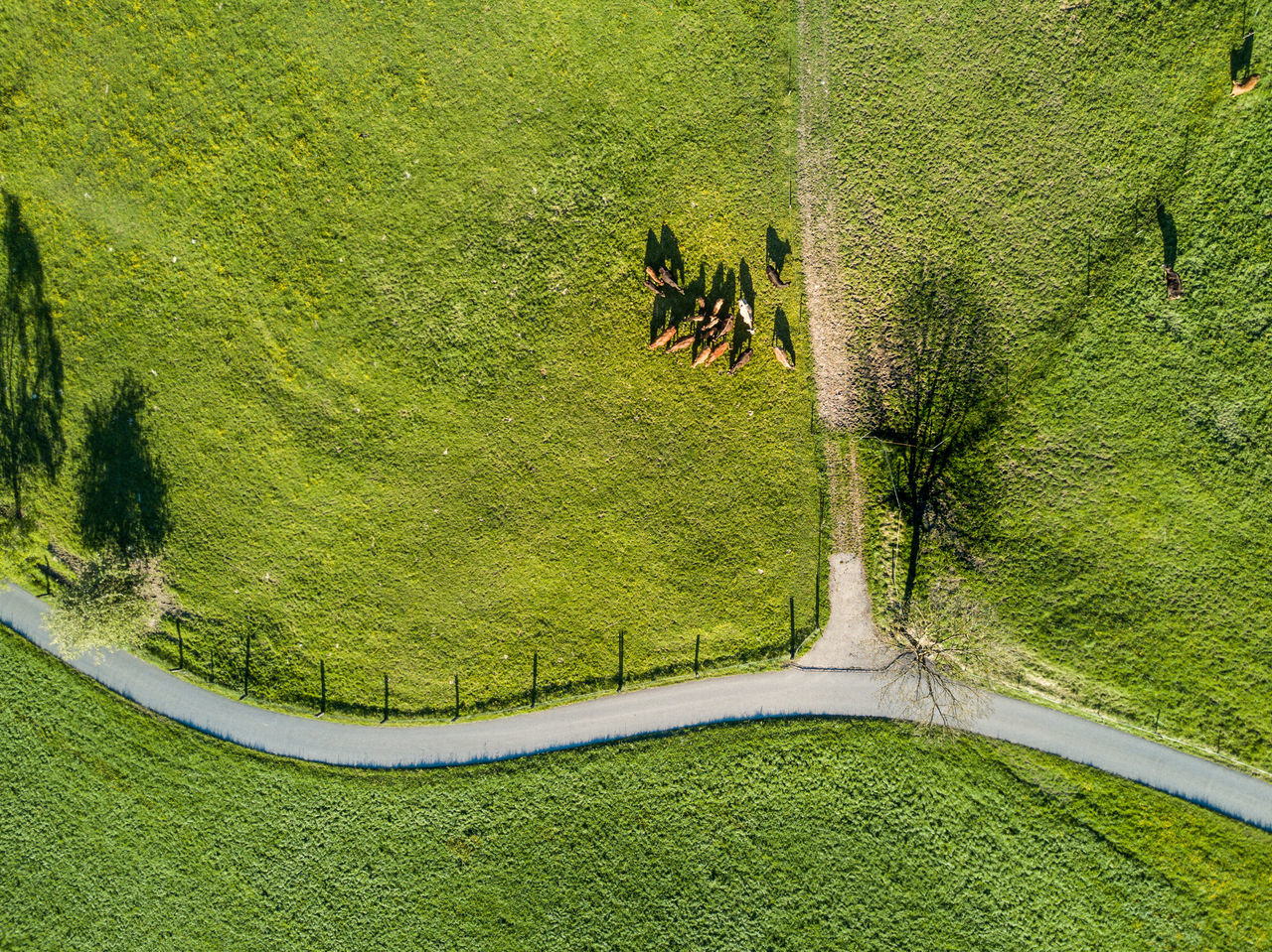 grass, green color, animal themes, high angle view, growth, nature, day, domestic animals, no people, outdoors, landscape, mammal, tree, bird