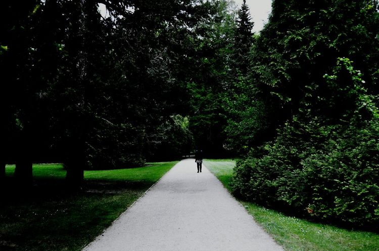Tree Growth Real People Outdoors Nature Green Color The Way Forward Day One Person Grass Men One Man Only Only Men People Canon600D NikonD5000 Sansoucci Potsdam Park Sanssouci Potsdam Forest