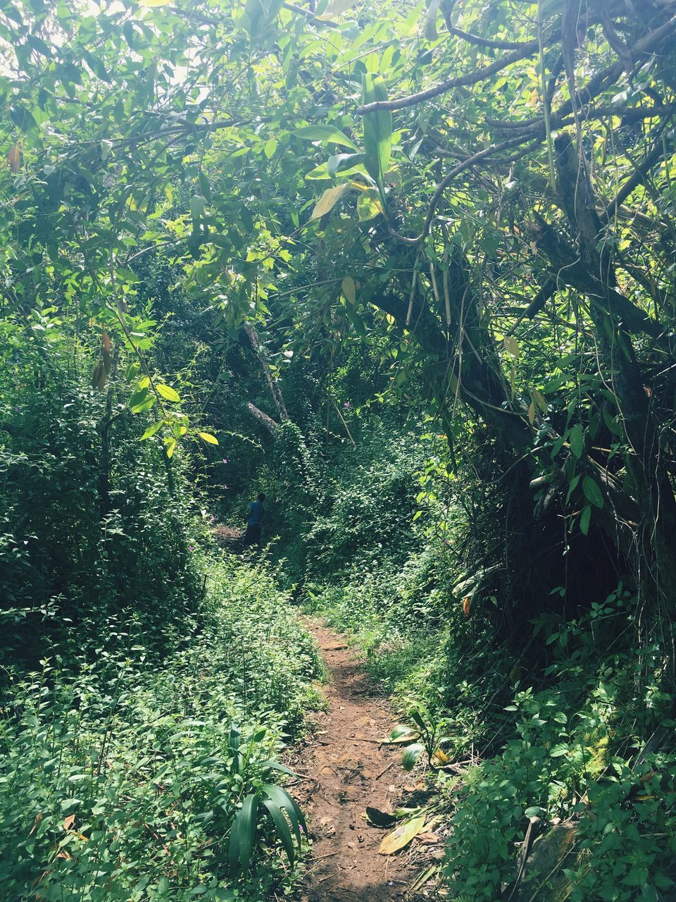 green, nature, adventure, forest, plant, growth, landscape, no people, day, outdoors