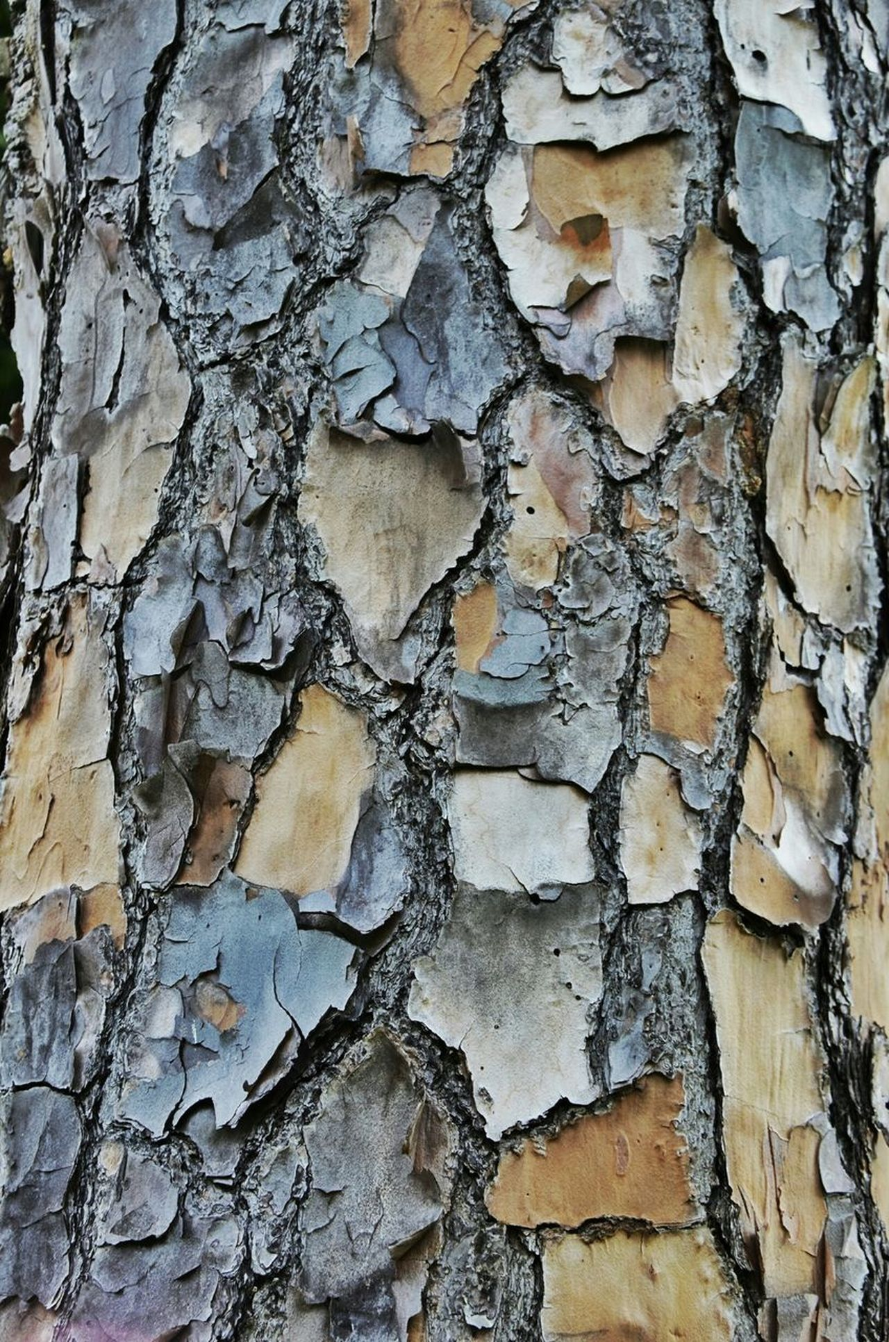 Beautiful stock photos of texture, , Backgrounds, Bark, Close-Up
