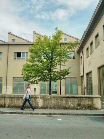 Vscocam VSCO Tree Immigrant Urban Landscape Streetphotography