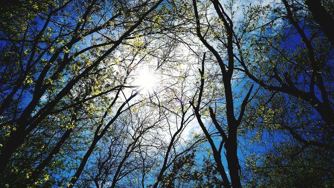 Landscapes With WhiteWall Sunshine Sunlight Nature Springtime Trees Sky White Rock Lake