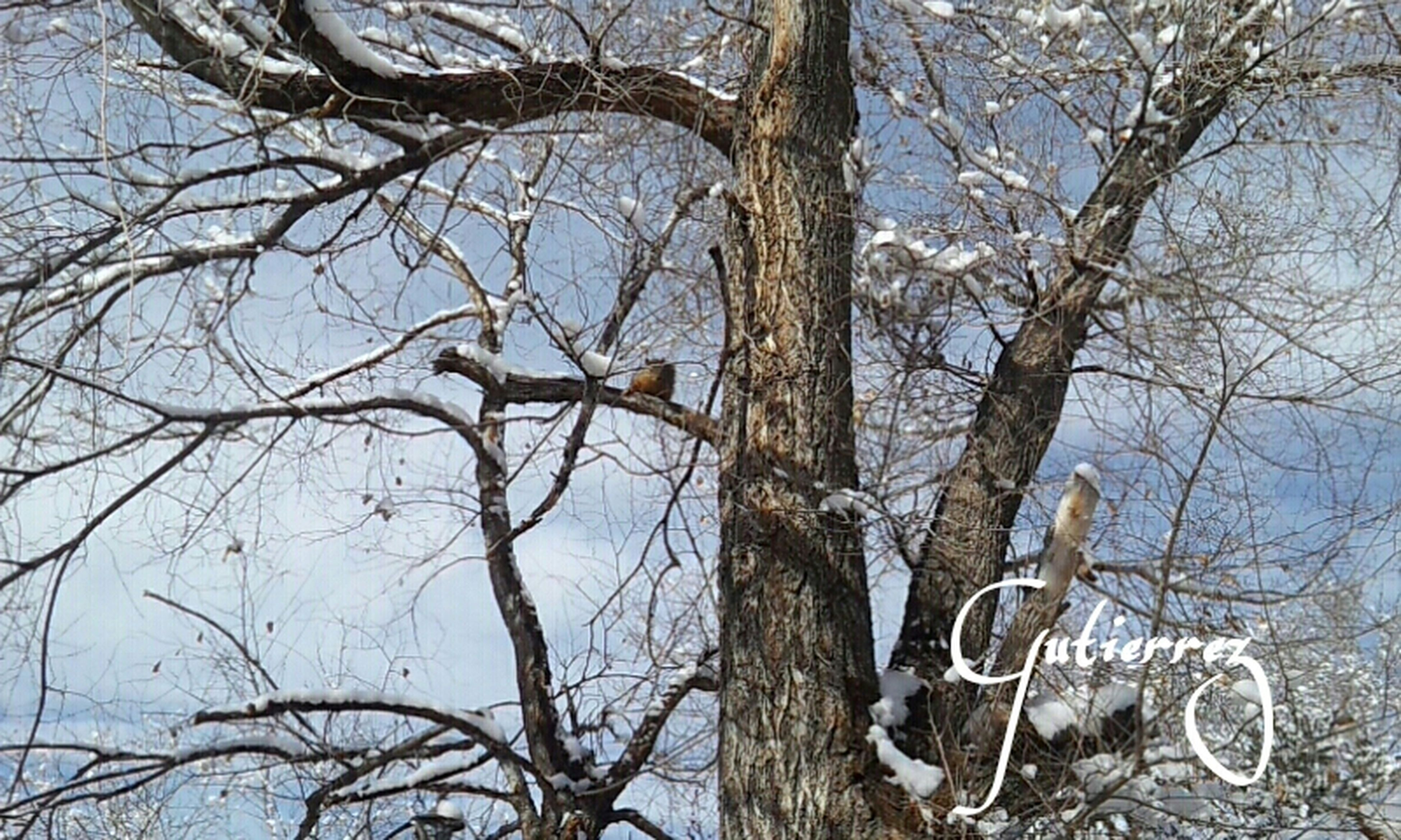 bare tree, branch, tree, tree trunk, low angle view, nature, winter, tranquility, sky, cold temperature, snow, day, outdoors, no people, beauty in nature, dead plant, wildlife, animal themes, bird, tranquil scene