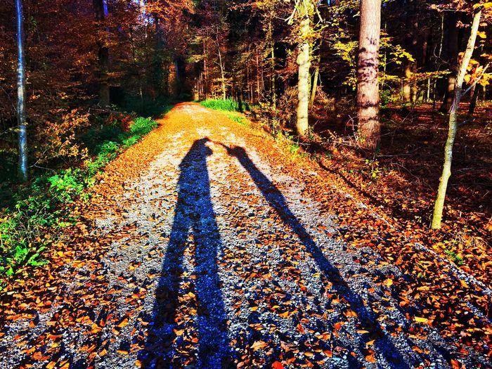 Shadowplay Light And Shadow Forest EyeEmSwiss EyeEm Nature Lover Mexturesapp Streamzoofamily Shadows