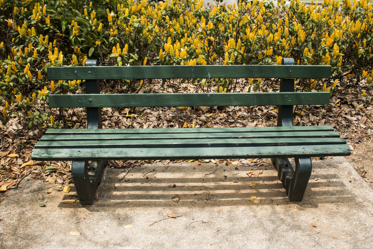 bench, day, growth, park - man made space, plant, nature, outdoors, no people, leaf, flower, beauty in nature