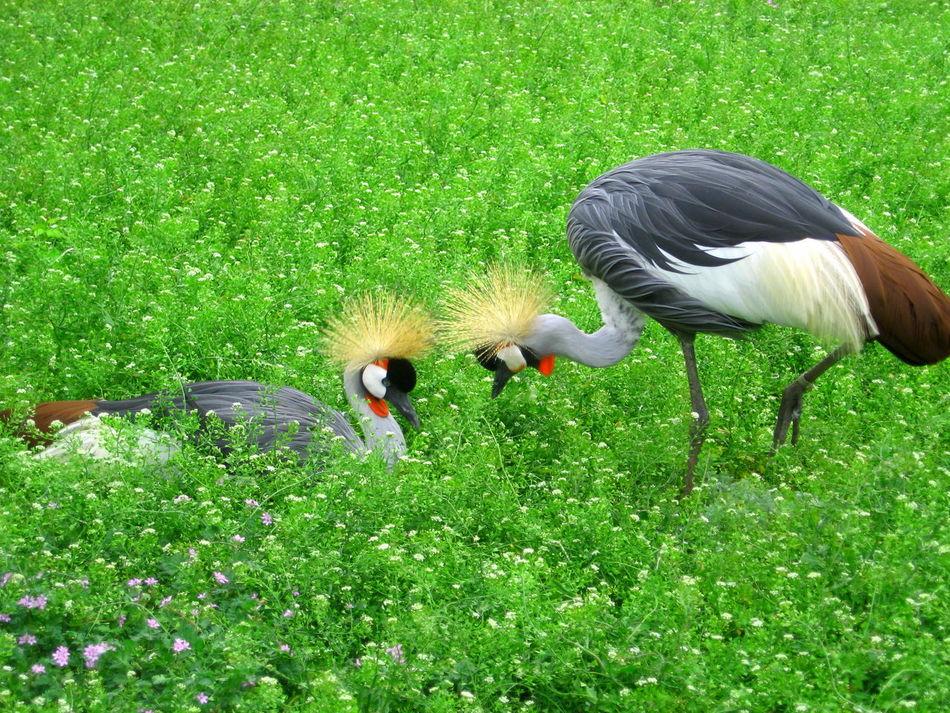 Bird Love Bird_lovers Birds Love Nature Q Question Showcase March Two Is Better Than One птицы любовь забота аскания нова