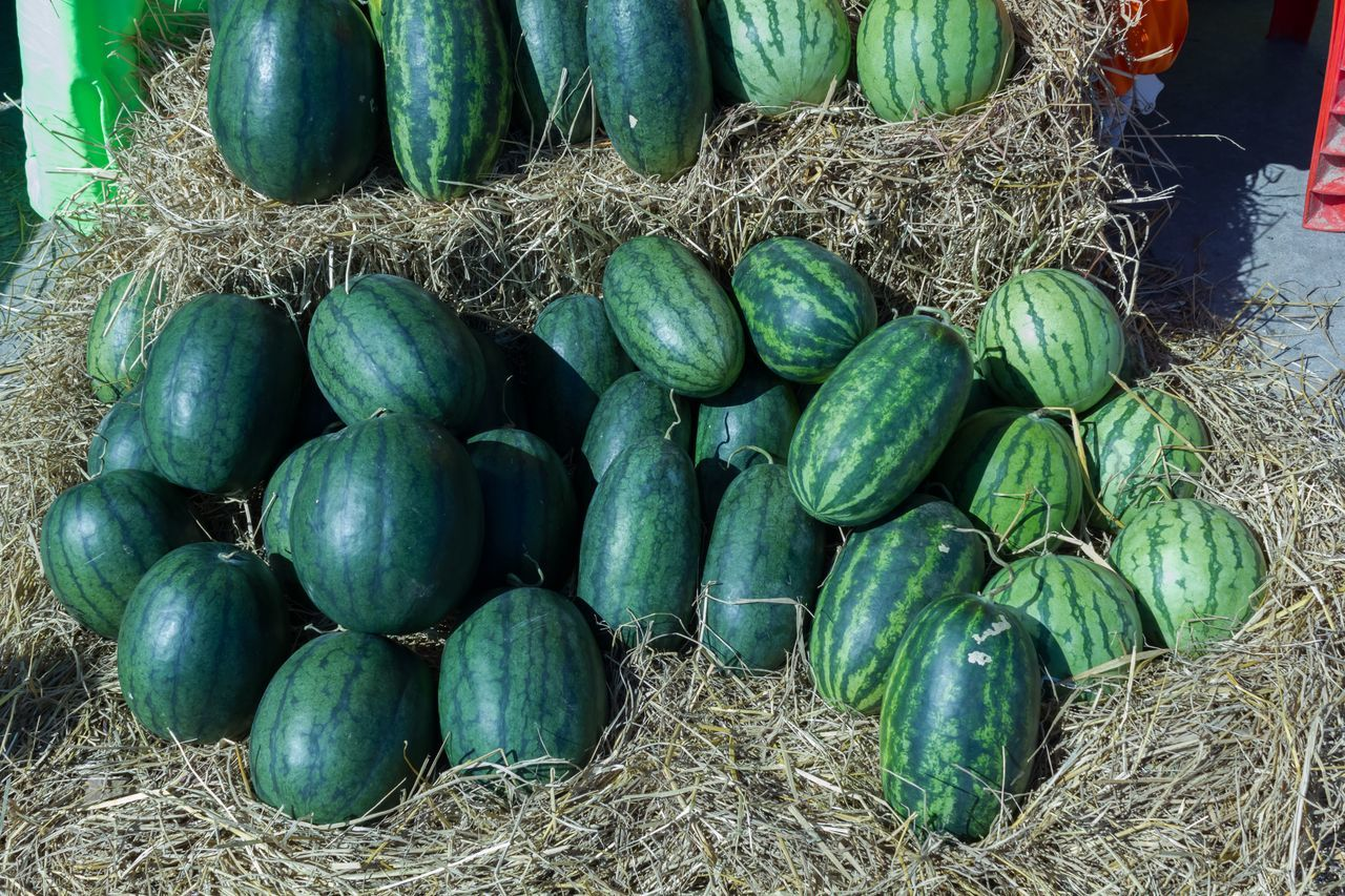 green color, vegetable, food and drink, day, no people, food, hay, outdoors, healthy eating, freshness, close-up, nature