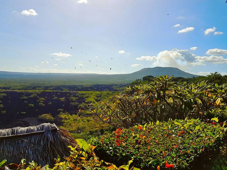 El hermoso y activo Volcán Masaya Nature Sky No People Beauty In Nature Outdoors Scenics Day Summer Vacation Trees Traveling Managua Nicaragua Enjoying Life Skyline Green Flying Plant Tree Close-up Agriculture Volcano Volcano Landscape Volcano National Park Scenic View Panoramic