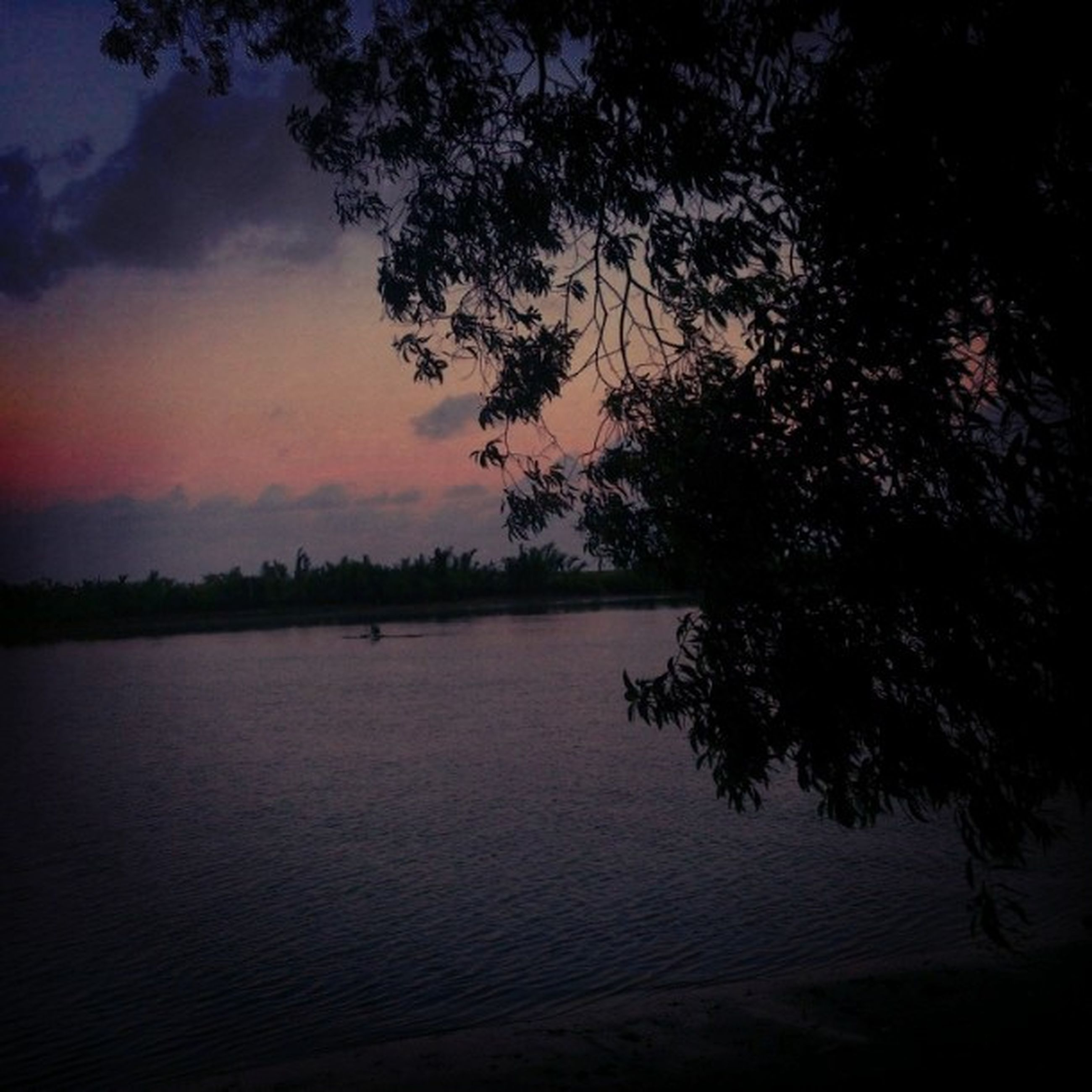 tree, sunset, tranquility, tranquil scene, silhouette, scenics, beauty in nature, water, nature, sky, lake, idyllic, dusk, reflection, orange color, growth, waterfront, outdoors, branch, non-urban scene