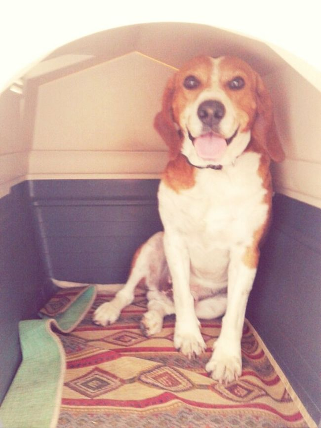 Hello! I'm Poldo and this is my house <3