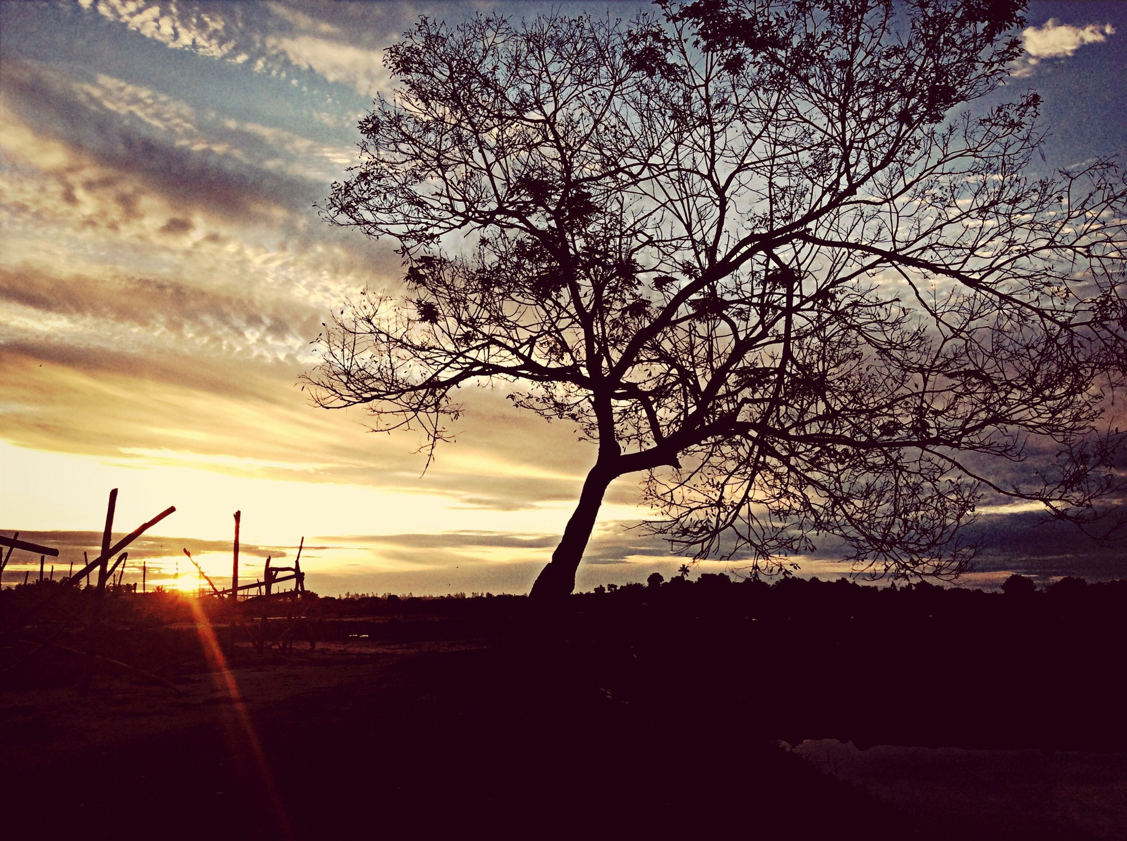 sunset, silhouette, tree, sky, tranquility, tranquil scene, bare tree, scenics, beauty in nature, nature, branch, landscape, cloud - sky, tree trunk, idyllic, field, cloud, sun, sunlight, non-urban scene