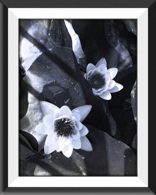 flowers Blackandwhite Italianeography EyeEm Best Edits Shootermag