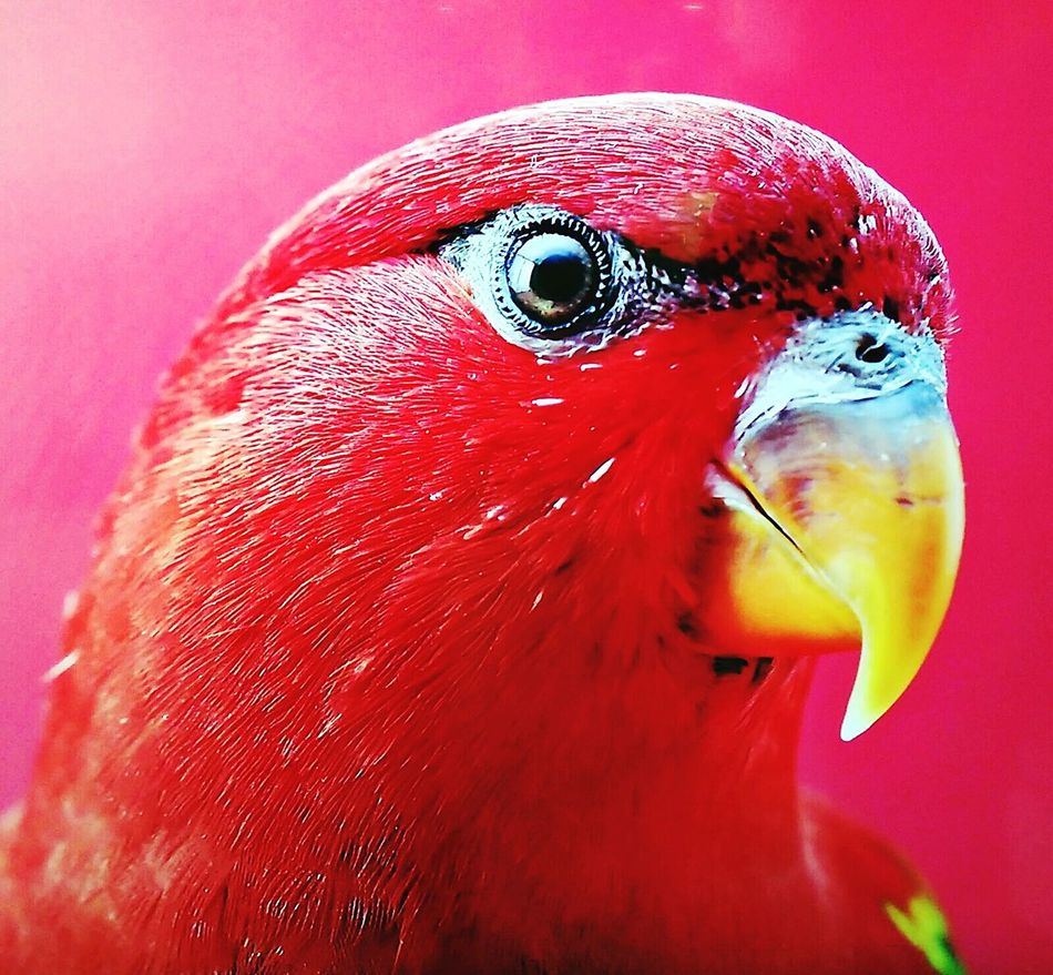 Bird Animal Themes Vibrant Color Multi Colored Beauty In Nature Incredible Colors EyeEm Nature Lover