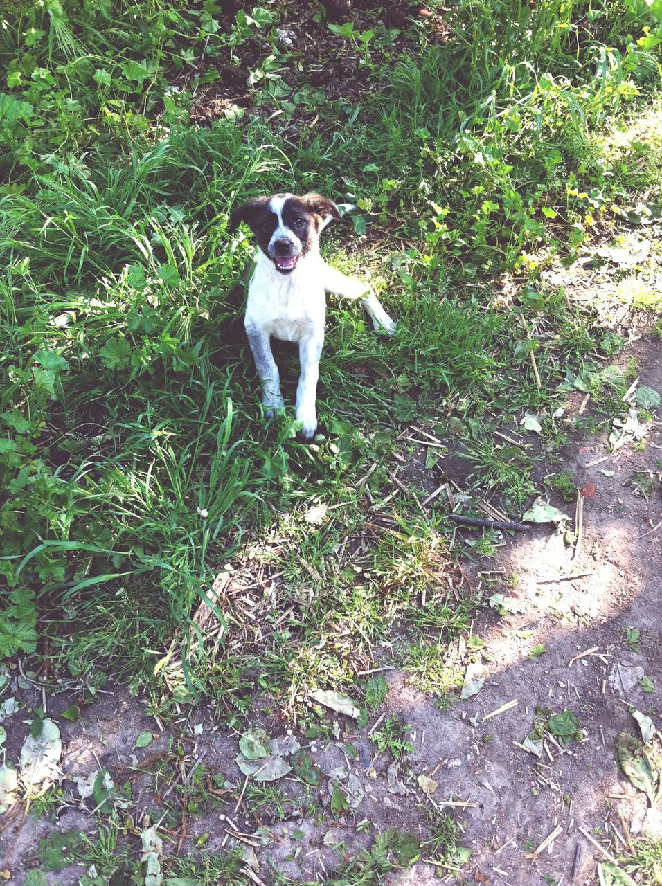 dog, pets, domestic animals, mammal, one animal, animal themes, outdoors, day, field, no people, nature, grass, tree