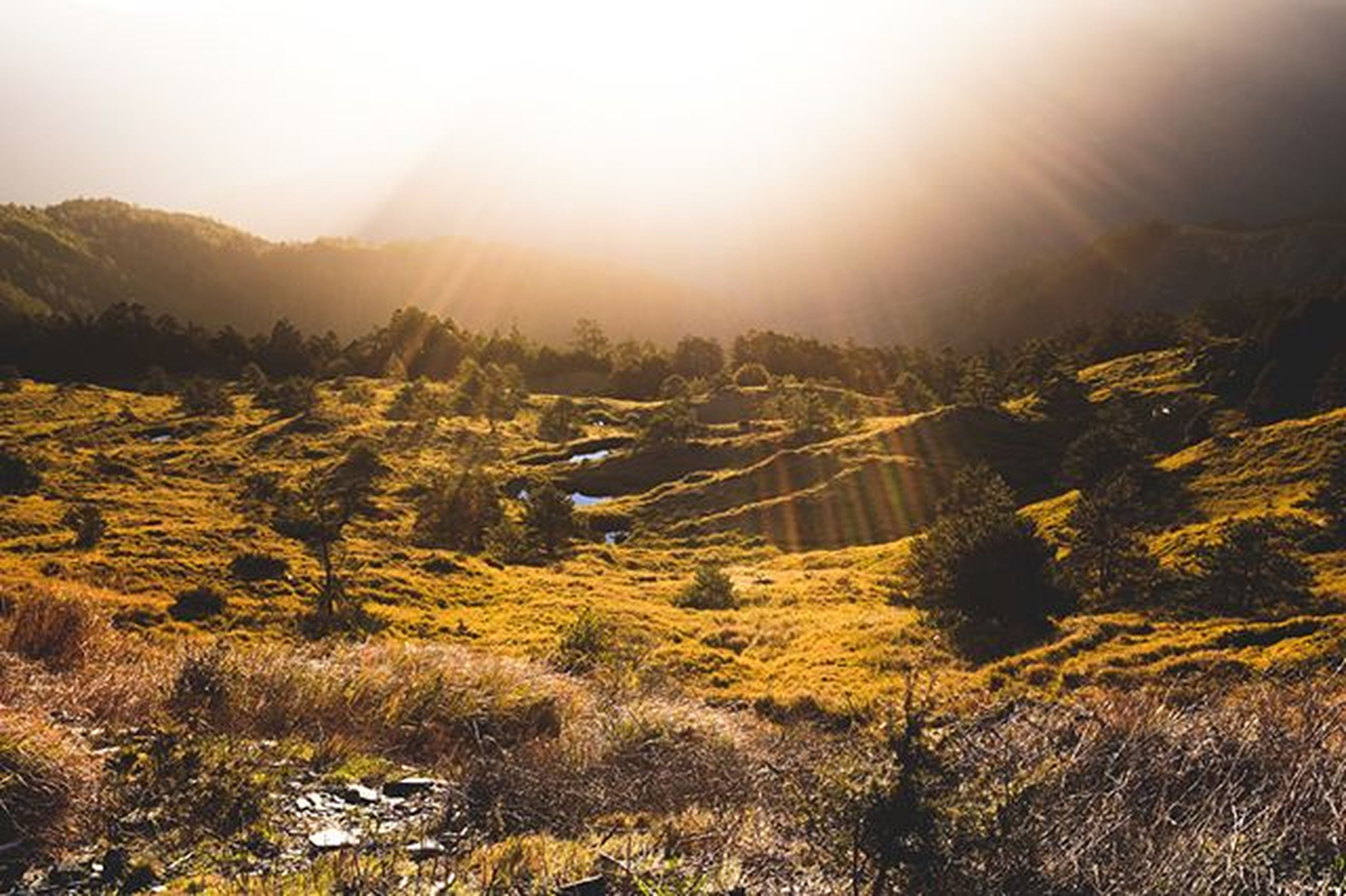 sun, mountain, tranquility, tranquil scene, landscape, sunlight, sunbeam, lens flare, scenics, sunset, beauty in nature, nature, sky, non-urban scene, idyllic, field, mountain range, no people, plant, outdoors