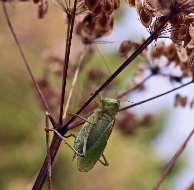 Tierfotografie aus Bielefeld Tiere Tierfotografie Bielefeld Animals Green Forest Nature Nature Photography