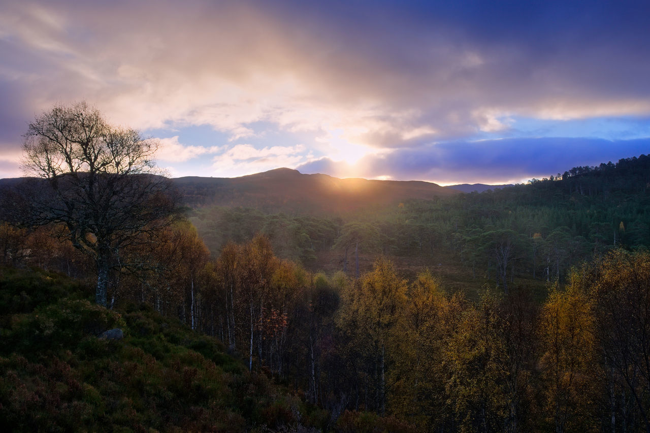 Sunrise in the Caledonian Forest, Glen Affric Beauty In Nature Caledonian Forest Cloud - Sky Forest Highlands Idyllic Landscape Landscape_Collection Landscape_photography Mountain Autumn Scotland Scotland 💕 Sky Tree Colour Of Life Trees And Nature Trees Tranquility Light