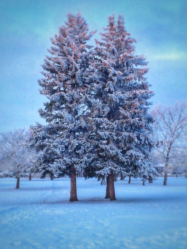 Trees. Nature Snow Winter Wonderland Seasons