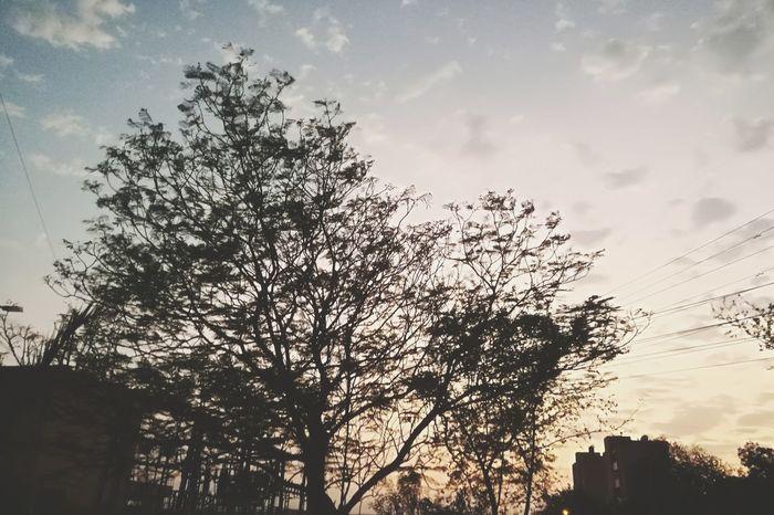 الطبيعة كلها لوحات فنية Tree Outdoors Cloud - Sky No People Low Angle View Beauty In Nature Nature Day Autumn Autumn 2017 Click EyeEm Simple Photography تصويري  Photo By Me Egypt سبحانك ربي No More My Photos