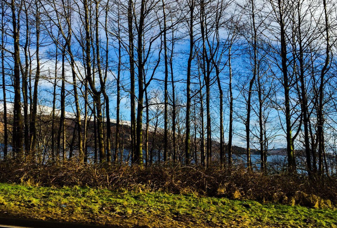 Beautiful World Outdoors No People Trees Loch Lomond Loch  Nationalpark Scenics Scotland LochLomond EyeEm Landscape Tree_collection  Treescollection Beautiful Nature Rural Scene EyeEm Nature Lover Outdoor Photography Tree_collection