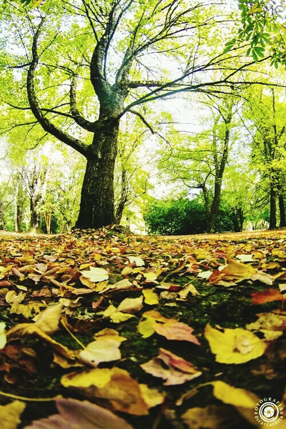 Otoño Valdivia First Eyeem Photo Lovely Trhee Nature Green 🌼🌿🍃🌳