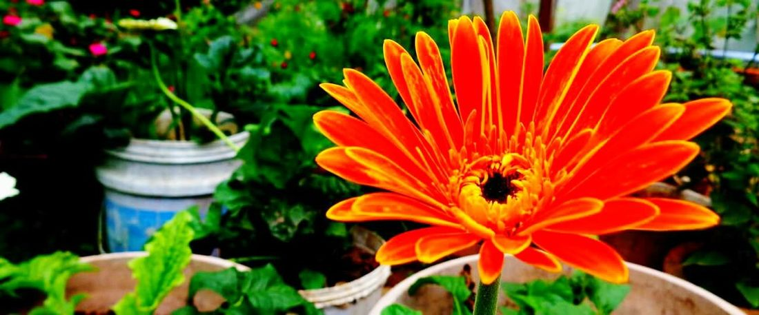 Flowres Flowers,Plants & Garden Flower Collection Flowers Nature_collection Flowers_collection Eyeem Flower Lover Flowrrs And Plants Garden Photography Gardening Garden Love Showcase: January