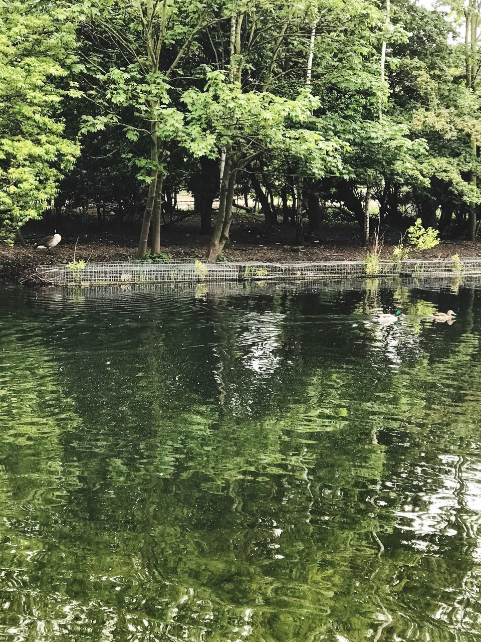 water, nature, lake, reflection, tree, forest, growth, outdoors, adventure, no people, beauty in nature, day