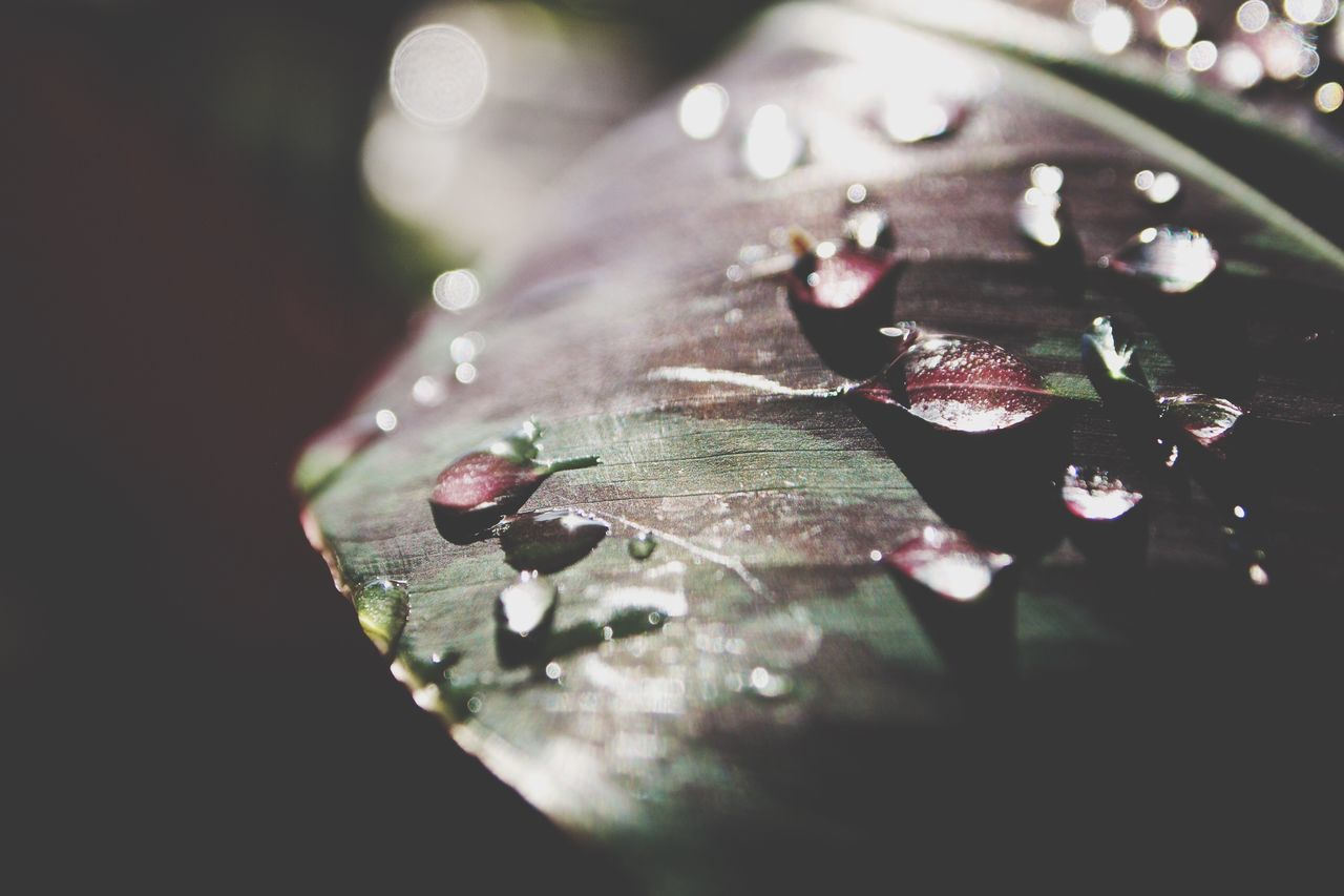 Beautiful stock photos of leaf, Auto Post Production Filter, Backgrounds, Close Up, Droplet