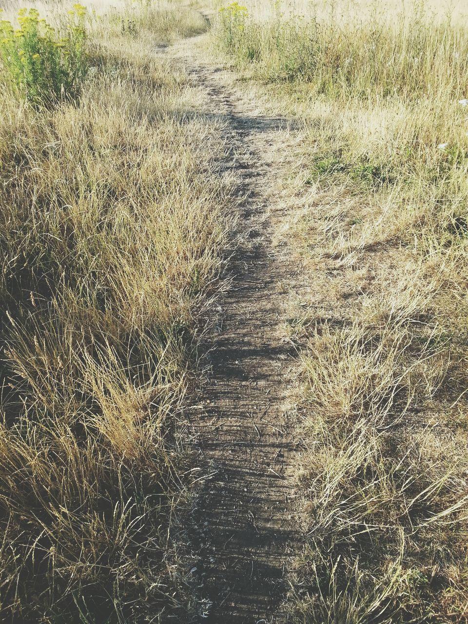 Dirt Road In Field