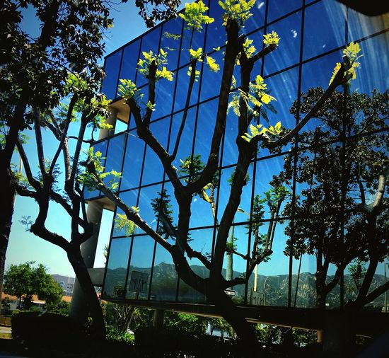 Trees Glass Mountains Reflections Architecture No People Low Angle View Outdoors Sky the mountains in the glass Pasadena, California