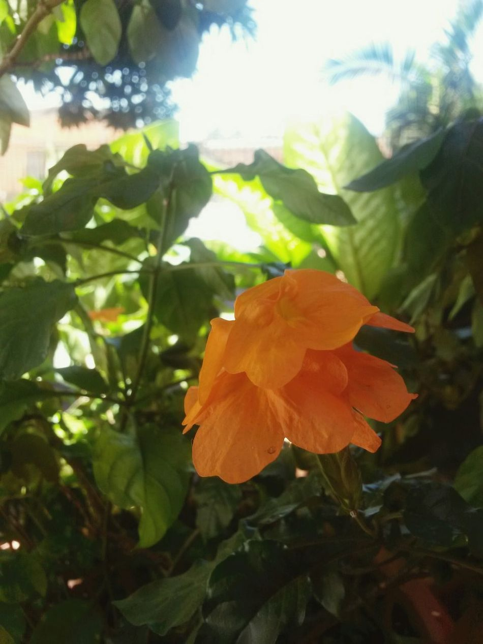 Enjoying Life Flowers ♡♡♡ Green♡ Check This Out Orange Flower Photography