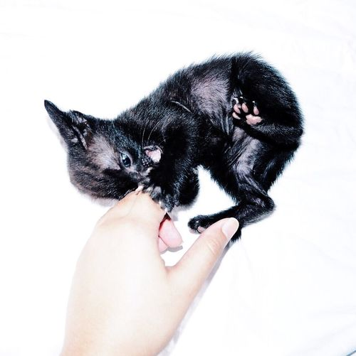 Tiny little thing you. Kittens Moon Thecat Pet
