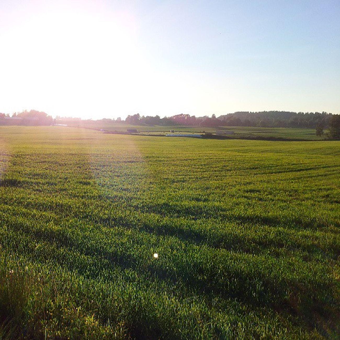 ås Akershus Follo  Norway norge bluesky sunshine solskinn umb fields green grønt jorde ilovenorway_akershus ilovenorway summer sommer ig_norway worldunion amund85_featuring nofilter nrksommer nsb_sommerinorge