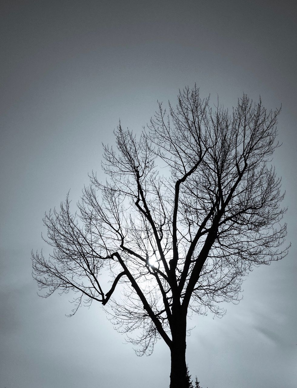 bare tree, branch, tree, lone, tranquility, isolated, beauty in nature, low angle view, nature, clear sky, outdoors, sky, day, no people