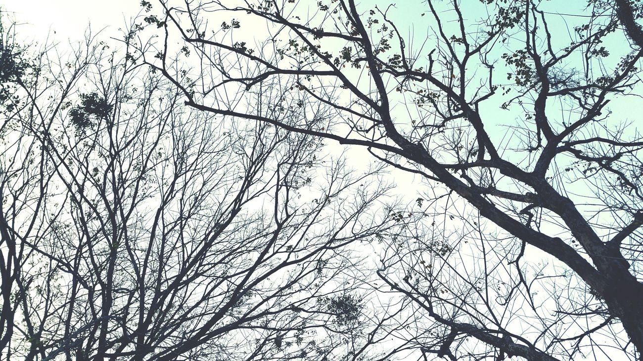 Goodmorning :) Sundayshooter Joggy Fresh Air Skylovers Treetastic