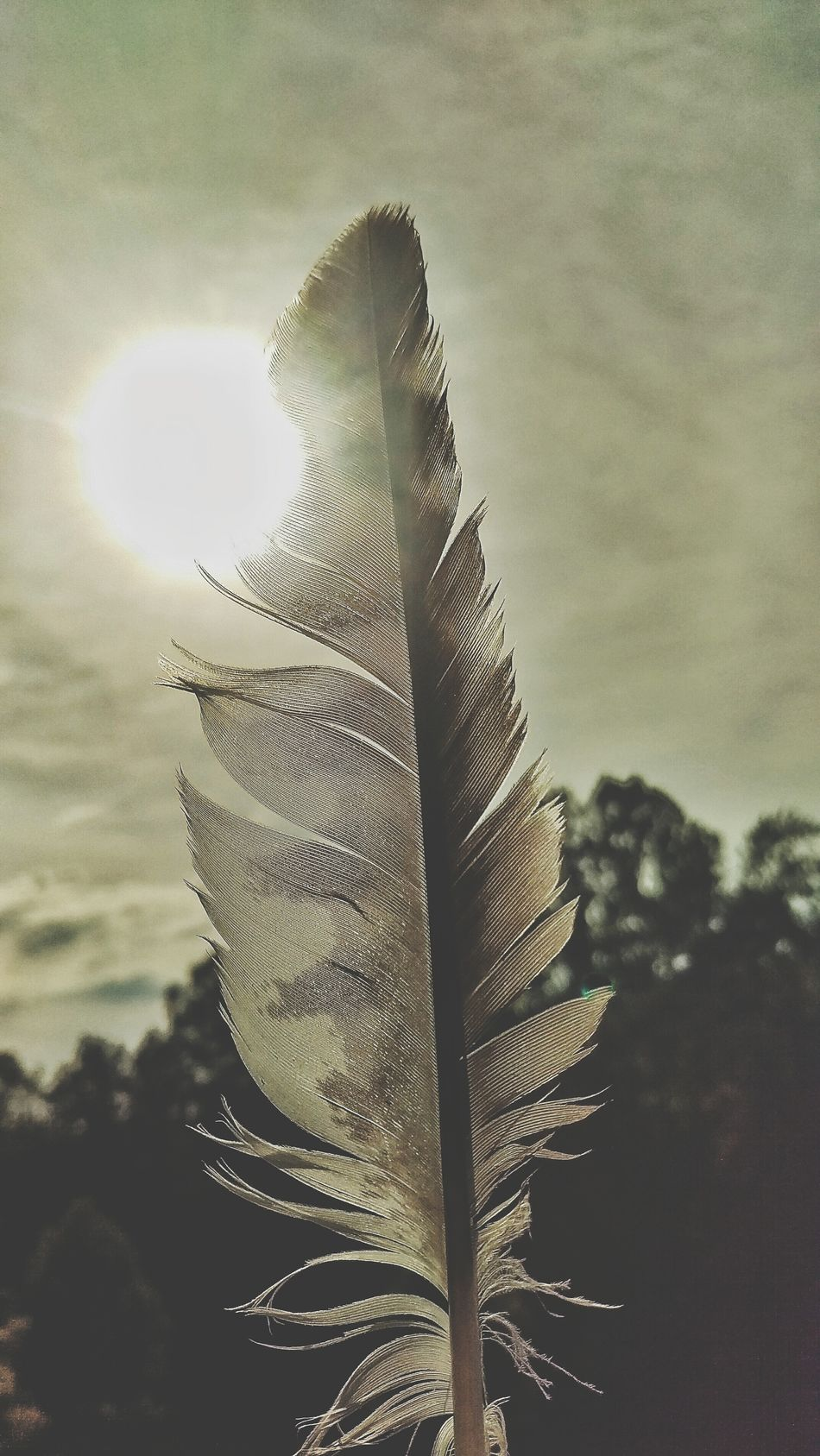 Hawk Feather Sunlight Feathers Natural Finds Nature Heals Nature Photography Eyemphotography Eyem Nature Lovers