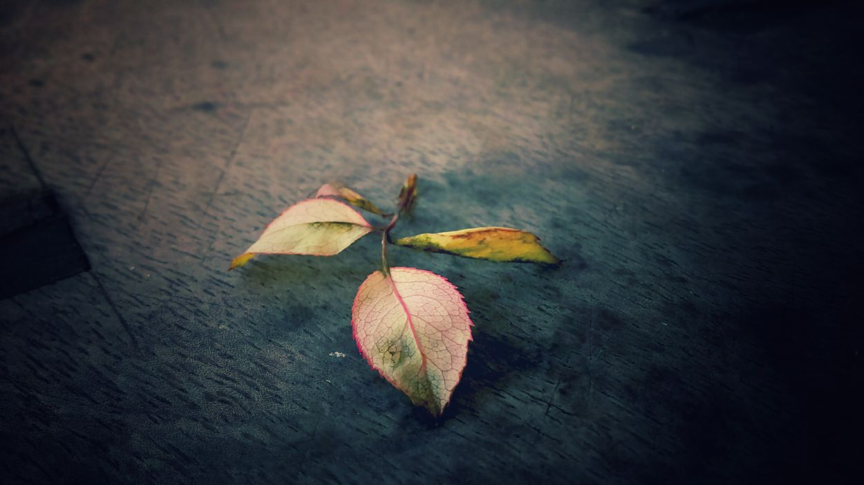 My Year My View Leaf Leafphotography Leaf Fantasy Beauty In Nature No People Nature HTC_photography Htc Sensation HTC Growth Enjoy The New Normal OutdoorsHtcPhoneOgraphy Hobby💛 Backgrounds Enjoying Life Freshness Planet Earth Fragility Variation Always Be Cozy Plants 🌱 Full Frame Close-up