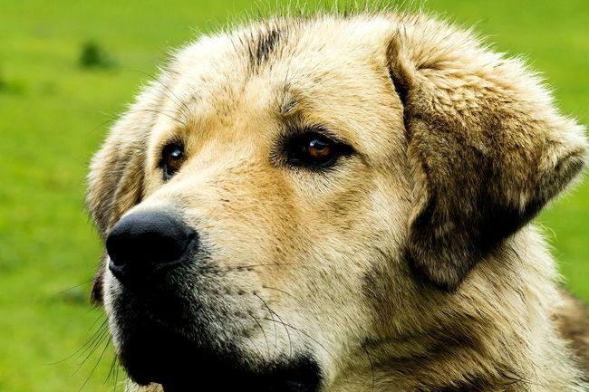 Canine Love :) Dog❤ JungleDairies Softy Cutiepie