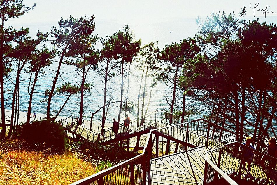 Looking down (Agfa-Style) Tree Nature Sky Outdoors Day Dune Du Pyla Boardwalk Dunes Fir Trees Tourist Attraction  Tourists France