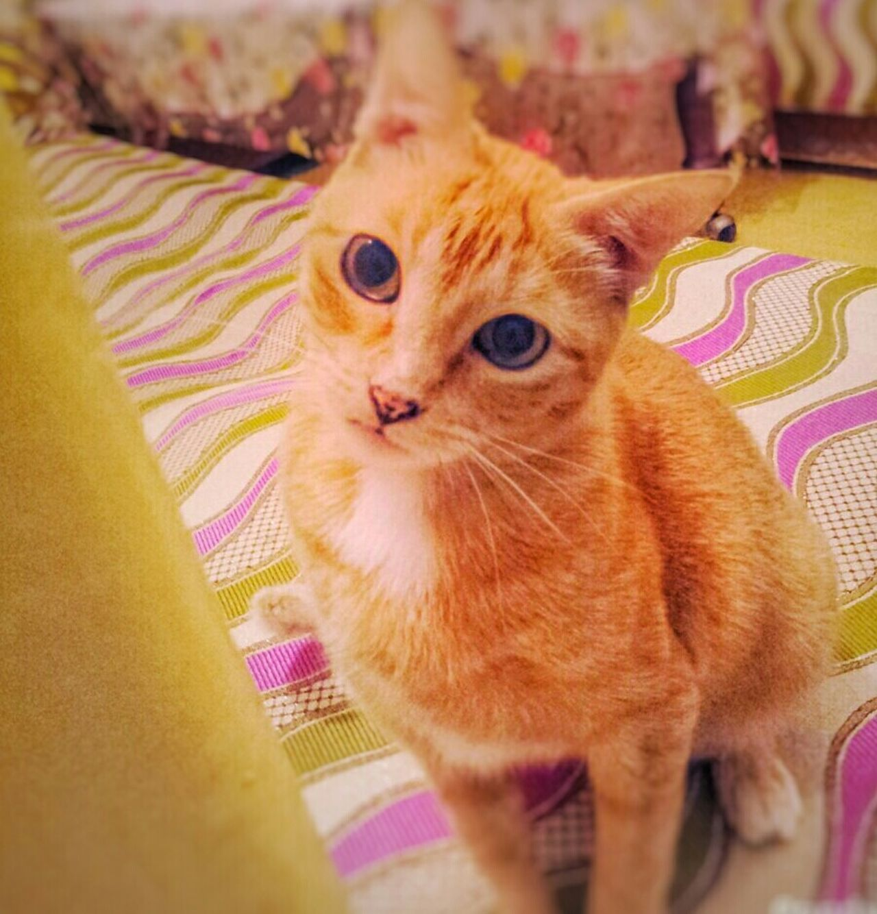 Pets One Animal Domestic Animals Domestic Cat Animal Themes No People Sweet Cat Orange Cat No Person Say Hello My Cat♥