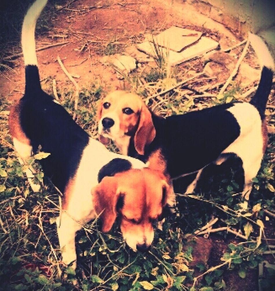 My Puppies ♥ Instagram: Waltergil13