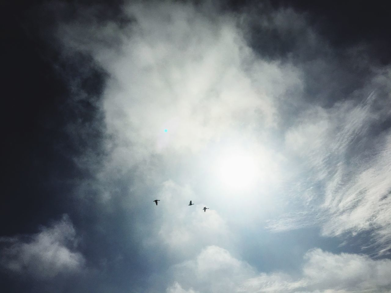 Flying Sky Low Angle View Cloud - Sky Bird Mid-air Nature Animal Themes No People Outdoors Animals In The Wild Day Beauty In Nature