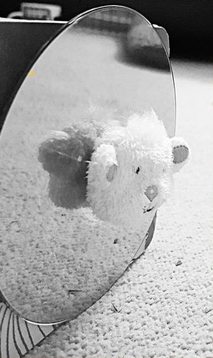 Mary had a little lamb! Mary Had A Little Lamb Weirdography Check This Out Taking Photos No People Conceptual Photography  Black & White Focused Odd Odd But Beautiful Surreal Animal Oddbeauty Strange Randomshot Staged