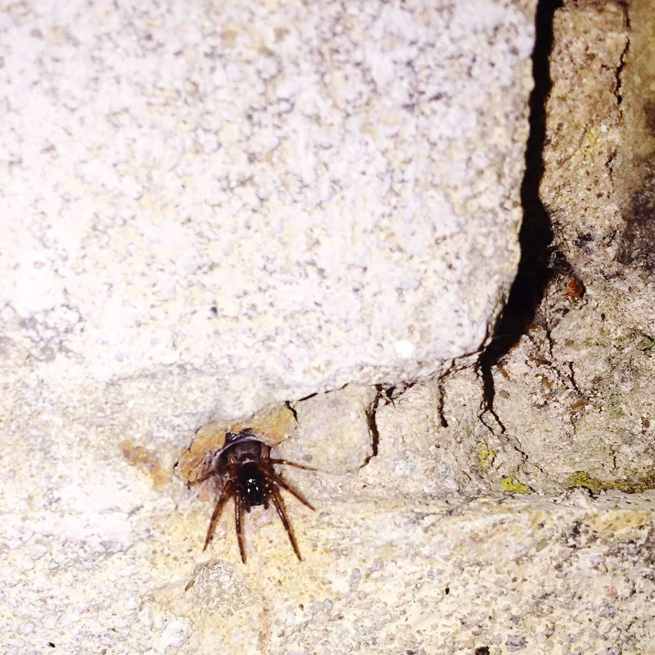 Check This Out Today's Hot Look Look Spider My Crib Hole Hole In My Wall Funny Moments Amazing Arachnids