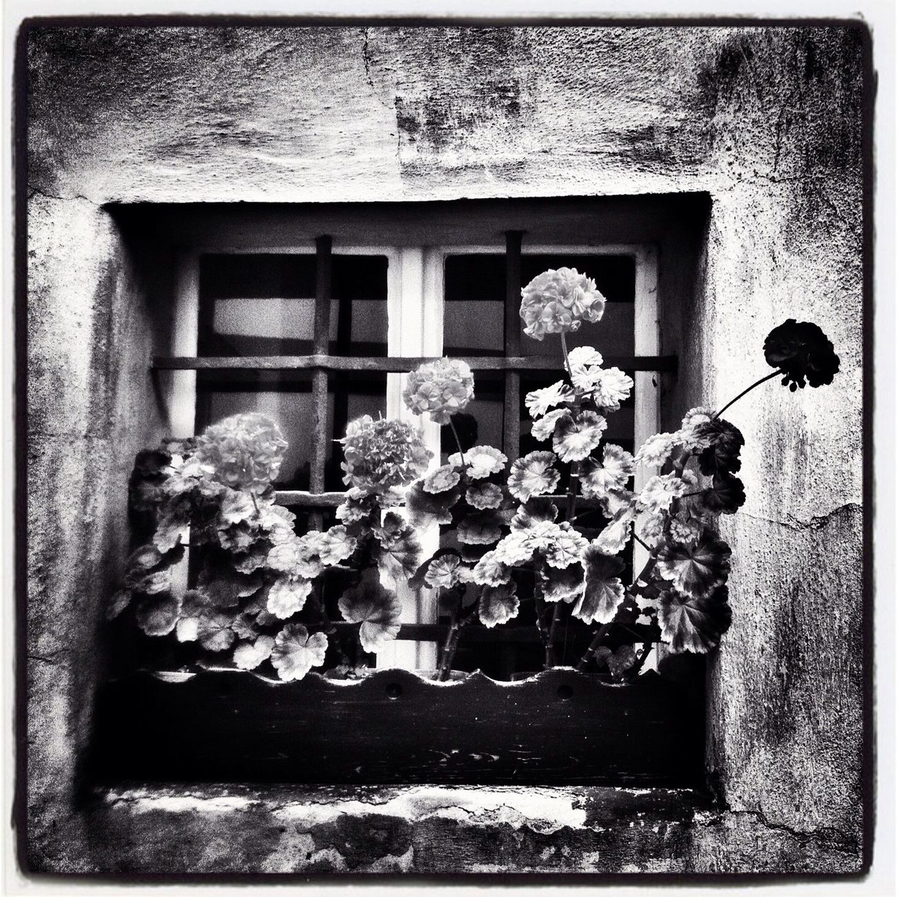 Flower Power... Blackandwhite Bw_collection Skrill IT Far From Home