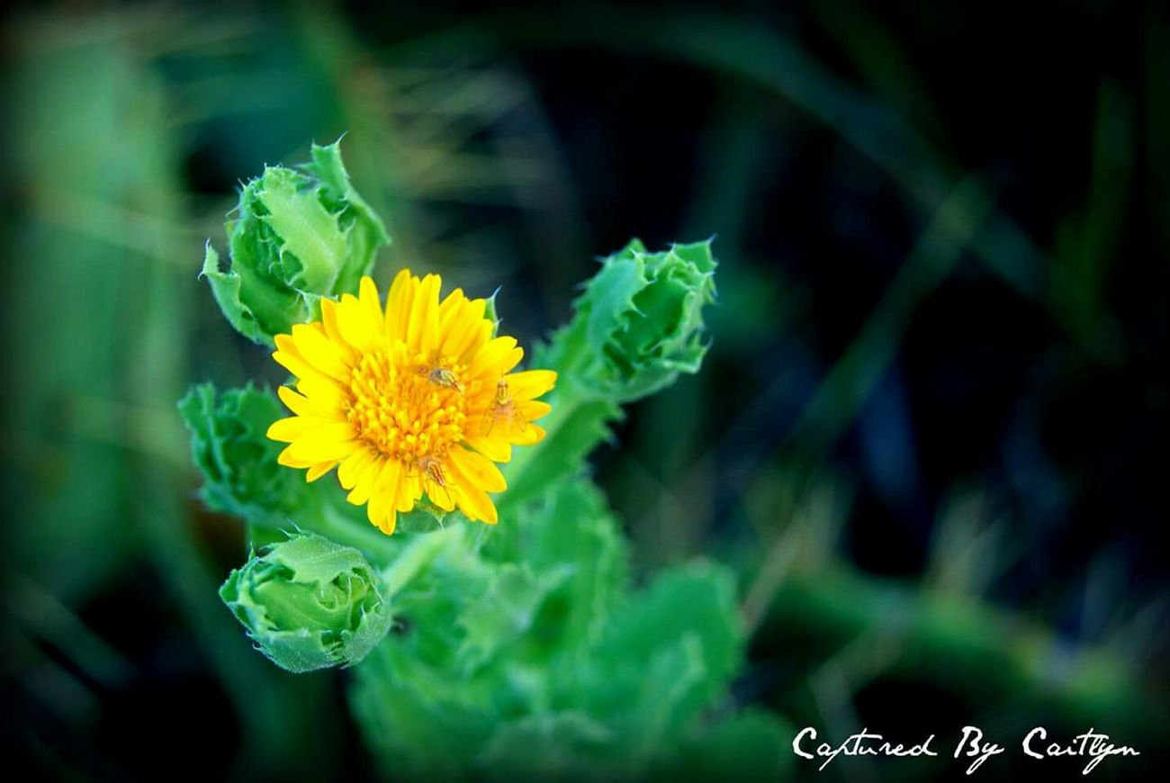 Flower Capturedbycaitlyn