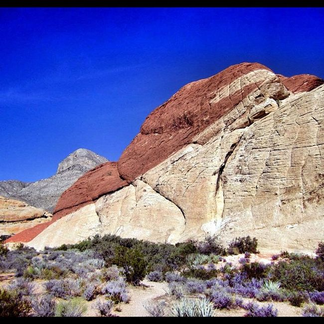 Red Rock Canyon #redrock #canyon #outdoors #desert #nevada #lasvegas #rock #wilderness #usa #travel #honktravel Desert Travel USA Outdoors Rock Wilderness Nevada Canyon Redrock Lasvegas Honktravel