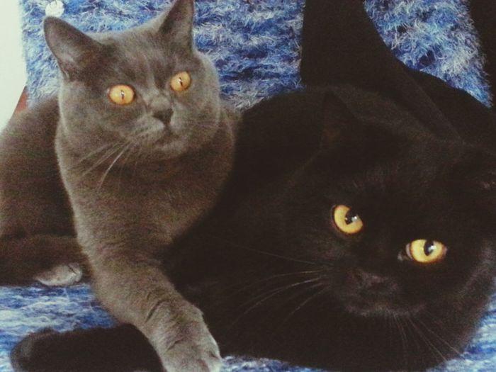 My Cat Ilovemycat I Love My Cats  Meine Katzenkinder♡♥♡